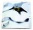 SCS Moisture Barrier Bag Dri-Shield 2700, 7.0 Mil, 12 In. X 16 In., 100Ea